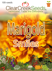 "African Marigold - ""Smiles"" (100+ seeds)"