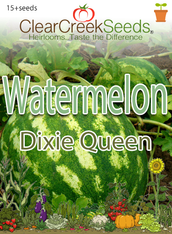 Watermelon - Dixie Queen (15+ seeds)