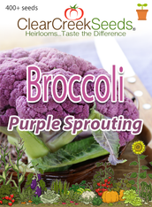 Broccoli - Purple Sprouting (400+ seeds) JUMBO PACK