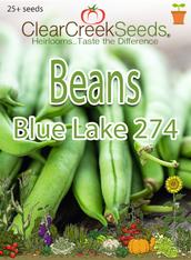 Bean (Bush) - Blue Lake 274 (25+ seeds)