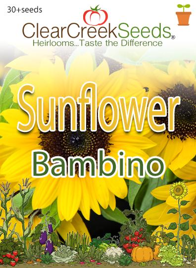Sunflower Dwarf Bambino 30seeds Clear Creek Seeds