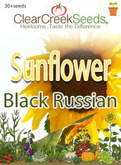Sunflower Black Russian (30+seeds)