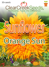 Sunflower Orange Sun (30+seeds)