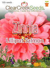Zinnia - Lilliput Salmon (100+ seeds)