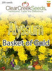 Alyssum - Basket of Gold (200+ seeds)