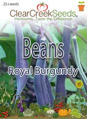 Bean - (Bush) - Royal Burgundy (25+ seeds)