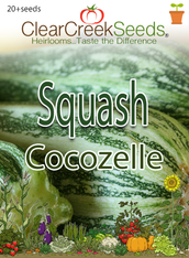 Squash Summer -  Cocozelle (20+ seeds)