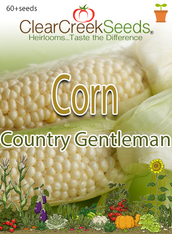 Corn – (Sweet) Country Gentleman (60+ seeds) JUMBO PACK