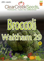 Broccoli - Waltham 29 (200+ seeds)