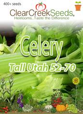 Celery - Tall Utah 52-70 (400+ seeds)