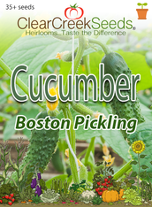 Cucumber - Boston Pickling (35+ seeds)