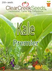 Kale - Premier (250+ seeds)