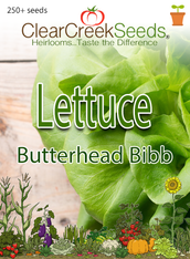 Lettuce Butterhead - Bibb (250+ seeds)
