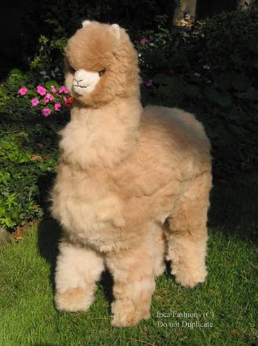 Life-Size Alpaca