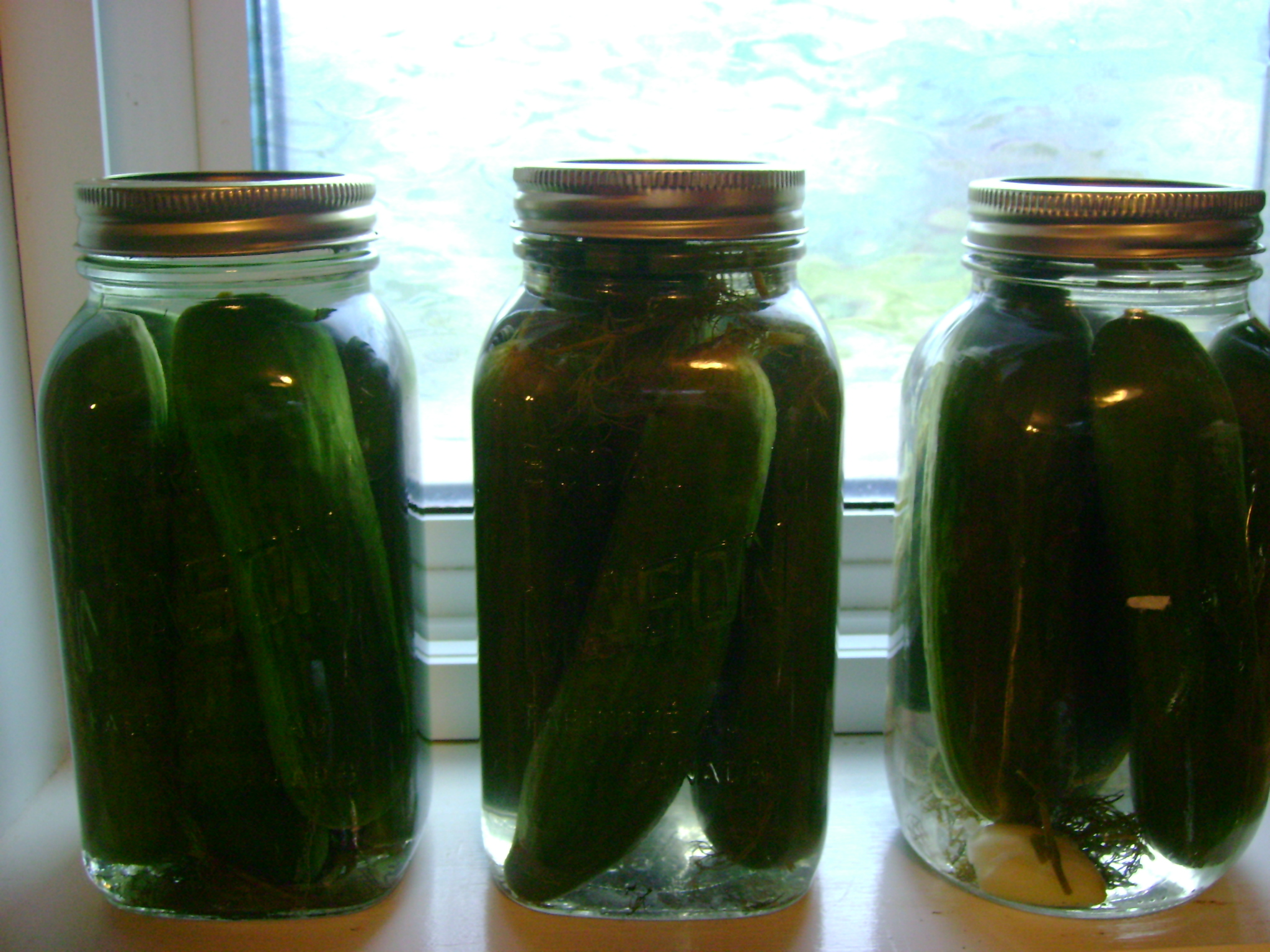 lacto-fermented cucumbers with fresh herbs