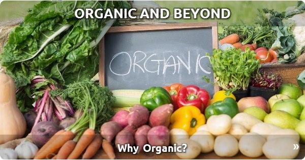 Organic and Beyond