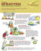 Sprouted whole grains for better digestion