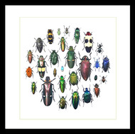 Framed Jewel Beetles