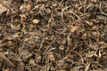 Bacopa Dried Herb
