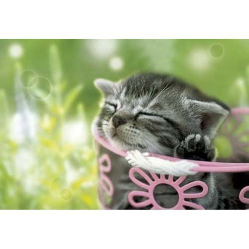 Epoch Jigsaw Puzzle 01-042 Cat Sleeping In The Sun (108 Pieces)