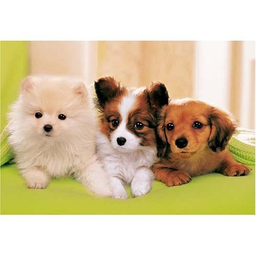 Epoch Jigsaw Puzzle 25-038S Three Dogs (300 Pieces)