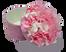 Pink Cream
