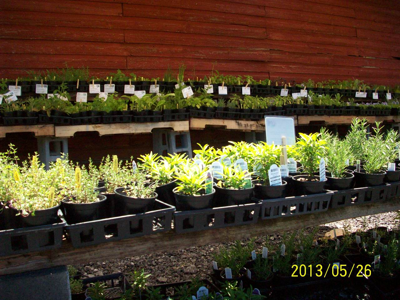 organic medicinal herbs for sale at farm