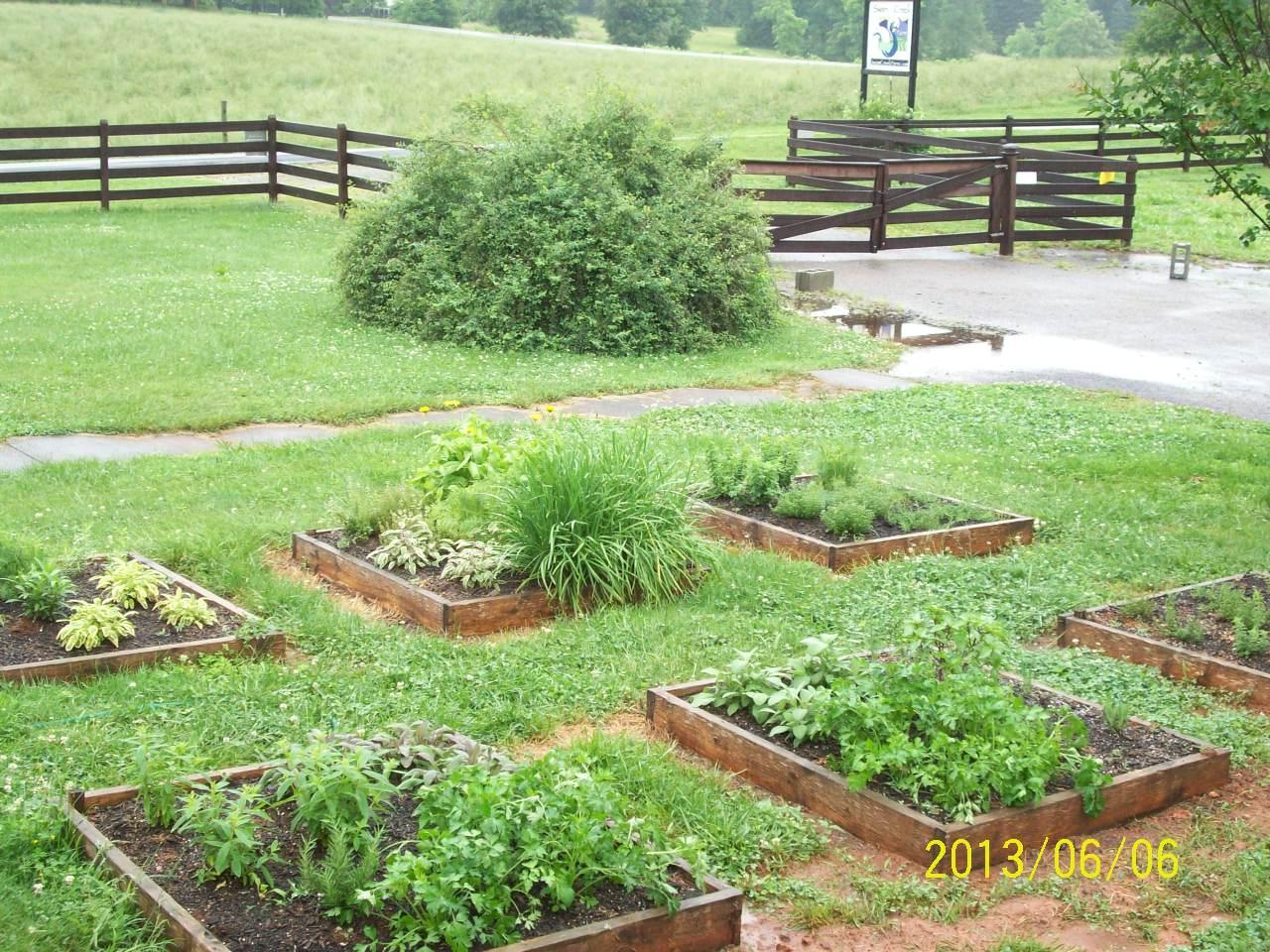 organic herbs growing photo