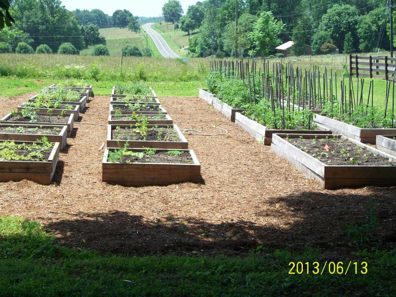 organic medicinal herb beds photo