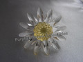 SCS 1999 Yellow Marguerite