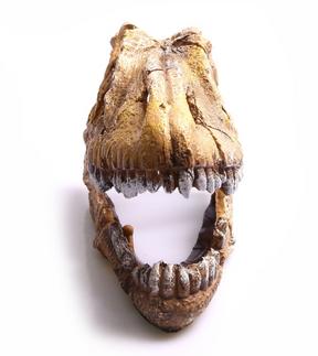 Aqua One Dinosaur Skull Ornament (36762)