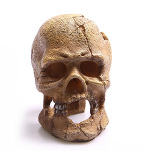 Aqua One Human Skull with Hole Ornament (36763)
