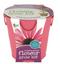 flower grow pail coneflower