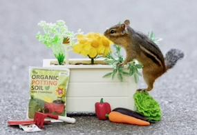 chipmunk gardening greeting card