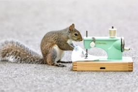 chipmunk sewing greeting card