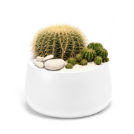 "Milano Short Medium White (D16"" H8"") - Barrel Cactus"
