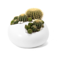Paloma Rock Large White Barrel Cactus