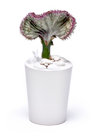Sweden Vase - Coral Cactus