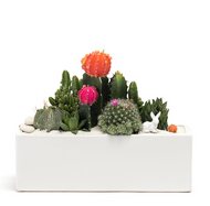 "Miami Rectangle White (L12"" W4"" H4"") -Garden"