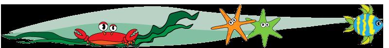 Crab and starfish design element