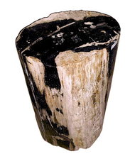 Petrified Wood - Stool - PT-STO-402