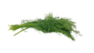 Herb - Dill