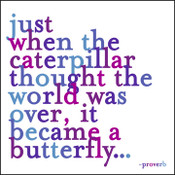 Just when the Caterpillar Quotable Card