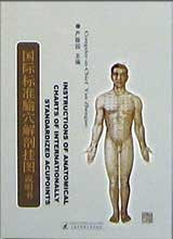 Anatomical Charts of Acupuncture