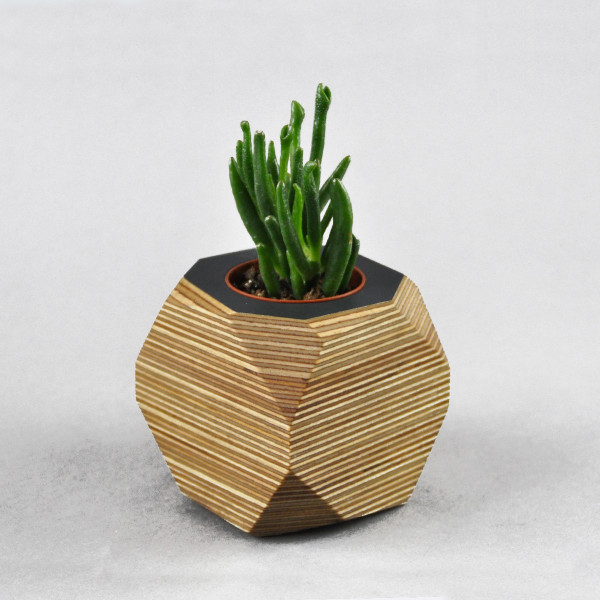 Top Down Geo Planter