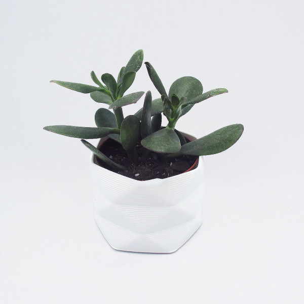 Medium 3D Printed Geometric Planter white by Studio Nilli at Of Cabbages and Kings