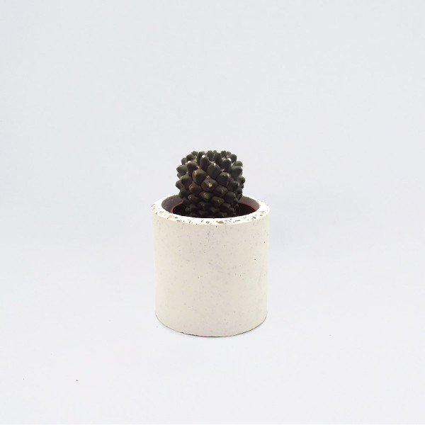 Small White Speckled Concrete Planter by Studio Noah at Of Cabbages & Kings