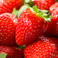Chandler - Strawberry