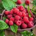 Raspberries - Nootka