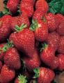 Goodmans - Strawberry